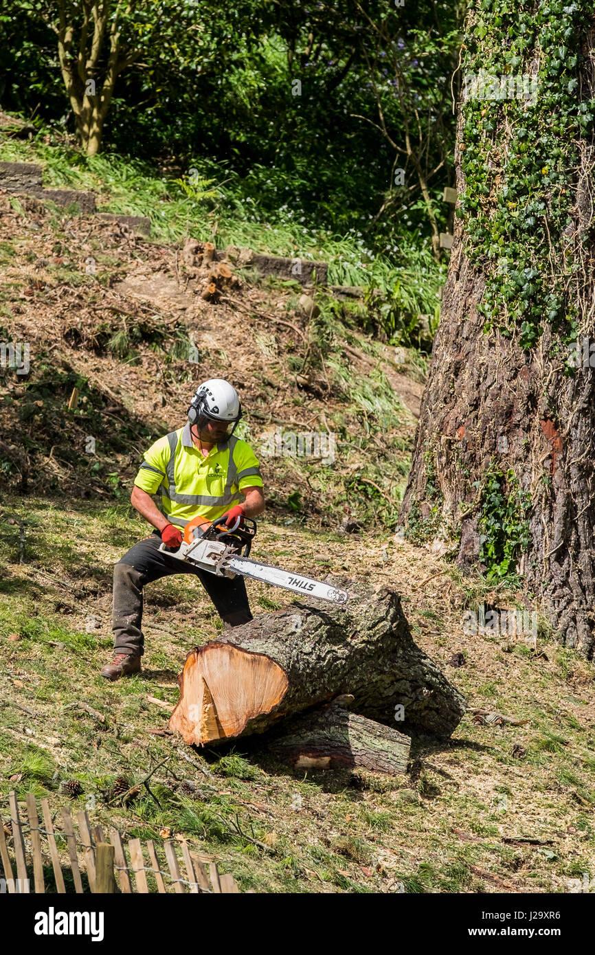 Baumpfleger Baumpflege Kettensäge schneiden Handbuch Arbeitnehmer Schutzkleidung Arbeiter industrielle Maschinen Stockbild