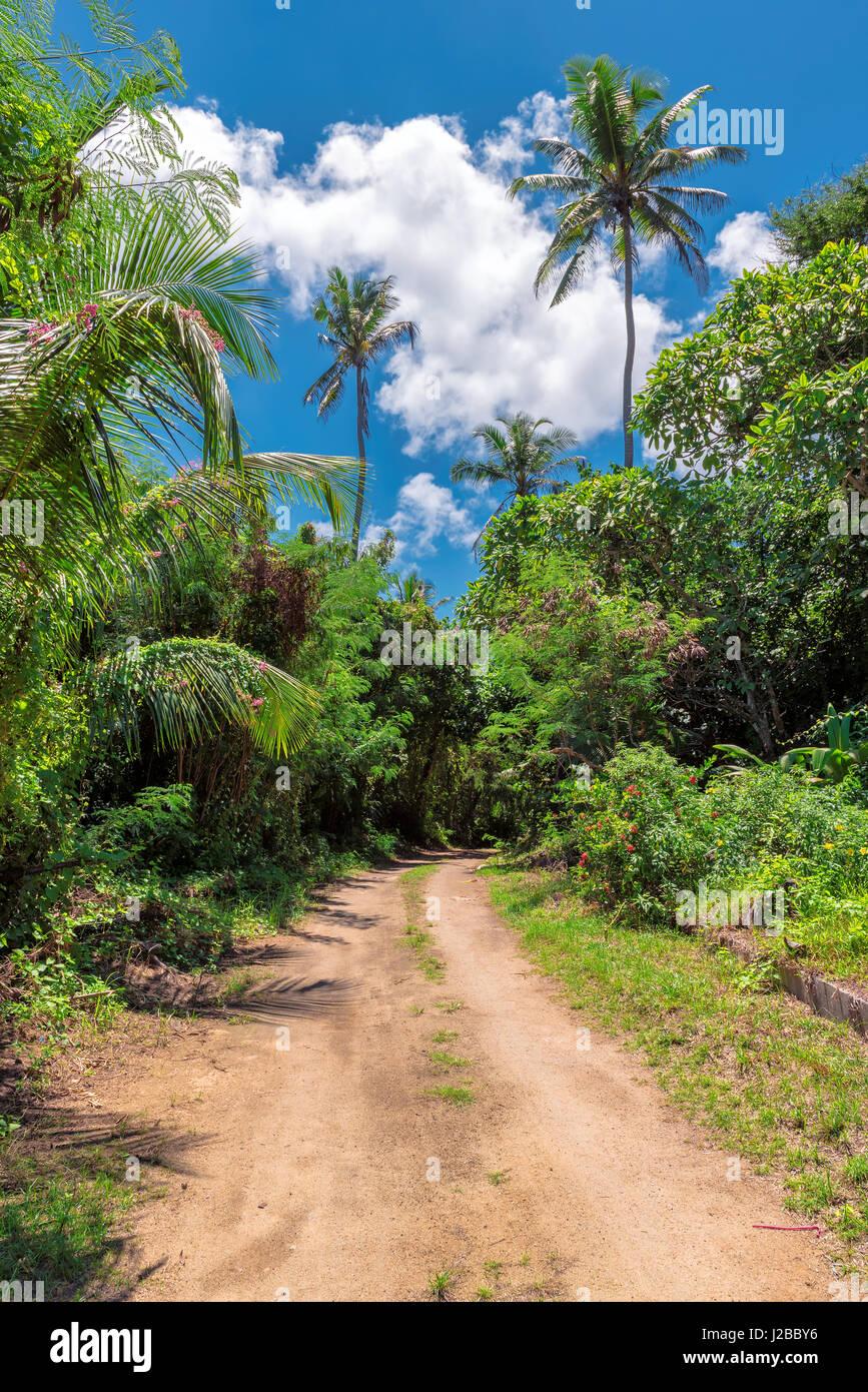 Afrikanischen Dschungel Straße Stockbild