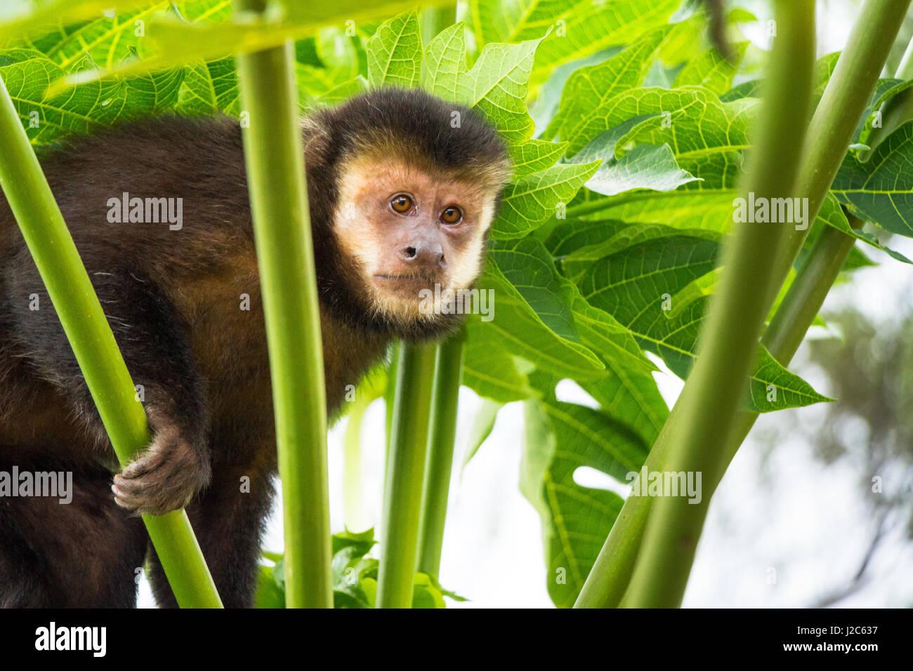 Fantastisch Malvorlagen Affen Springen Bett Galerie ...