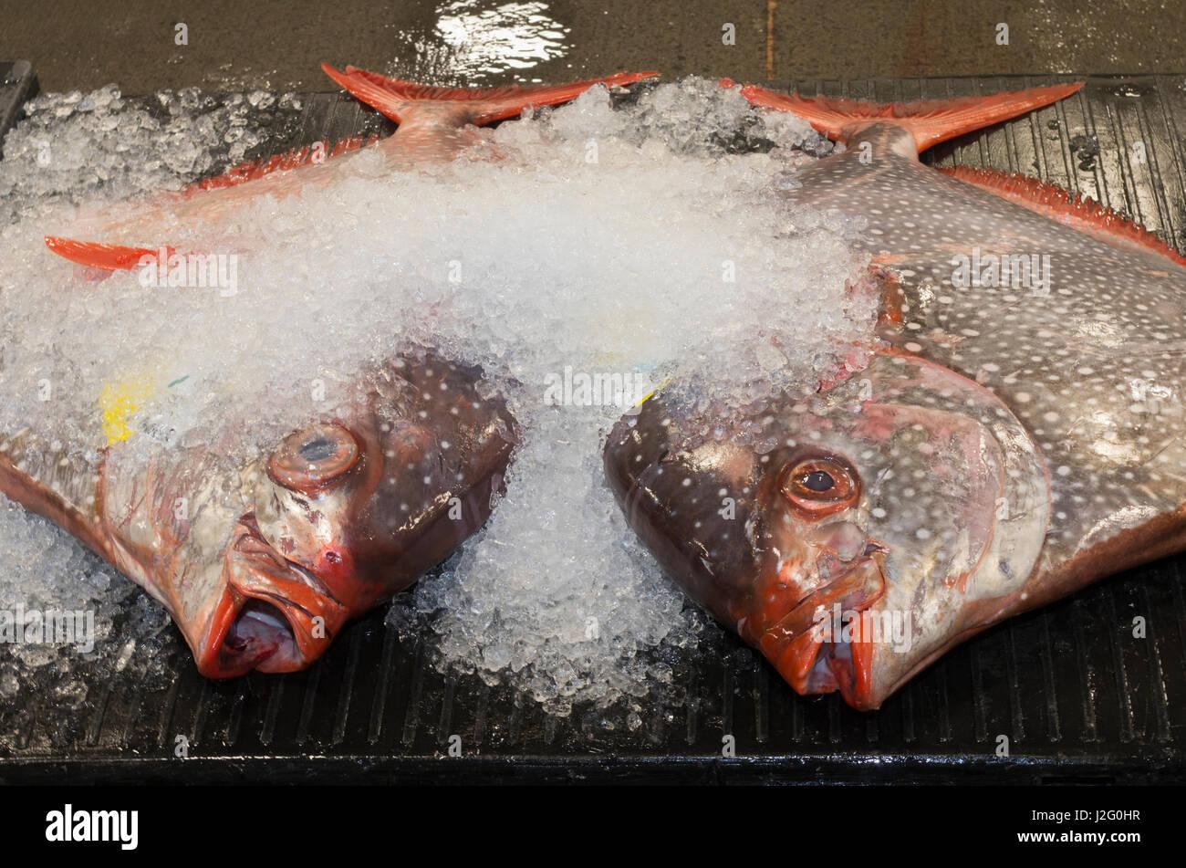 USA, Hawaii, Oahu, Honolulu. Opah oder Moonfish bei Honolulu Fischauktion, einzige kommerzielle frischer Thunfisch Auktion in USA. Stockfoto