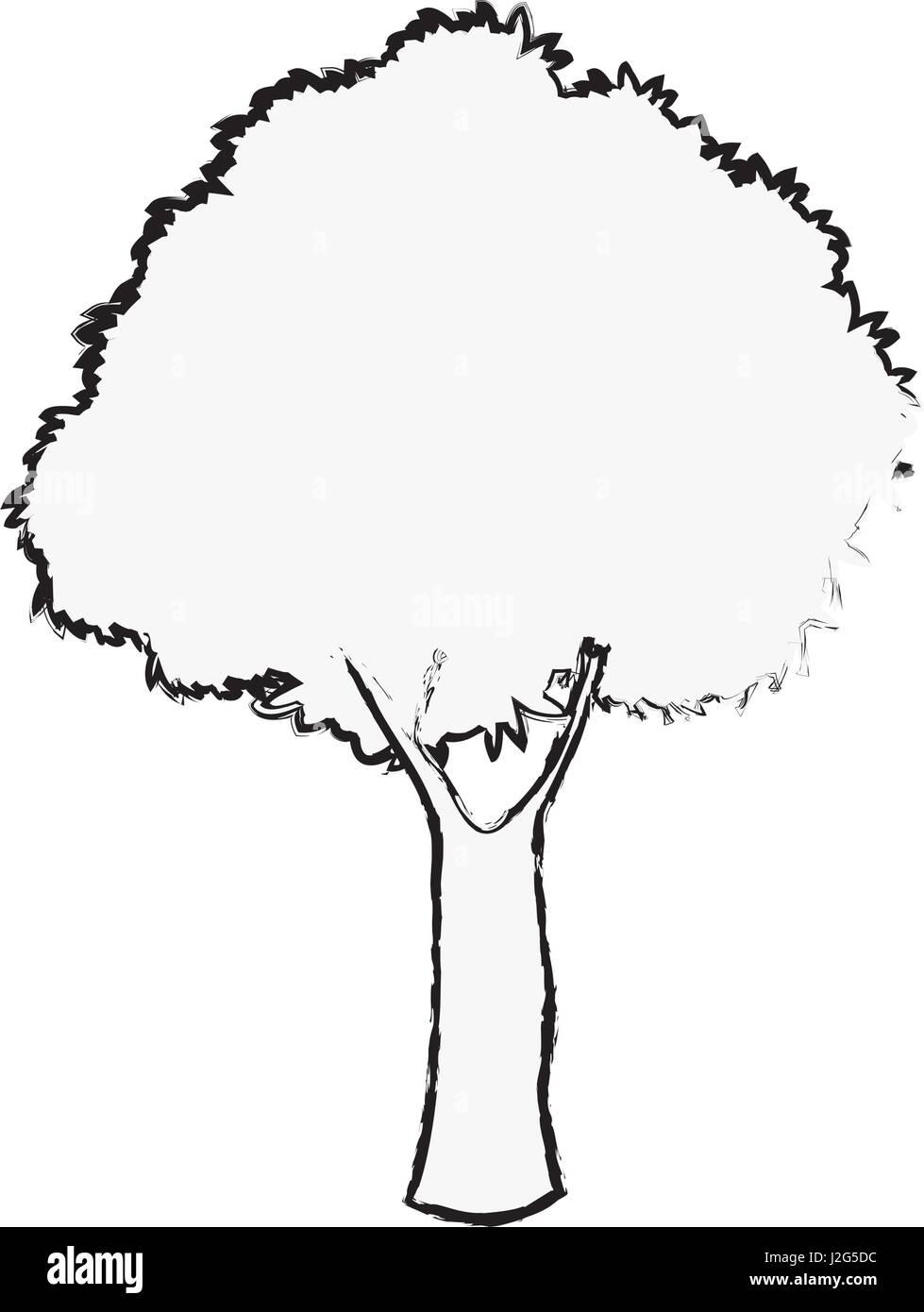eiche baum laub Ökosystem pflanze skizze vektor abbildung - bild