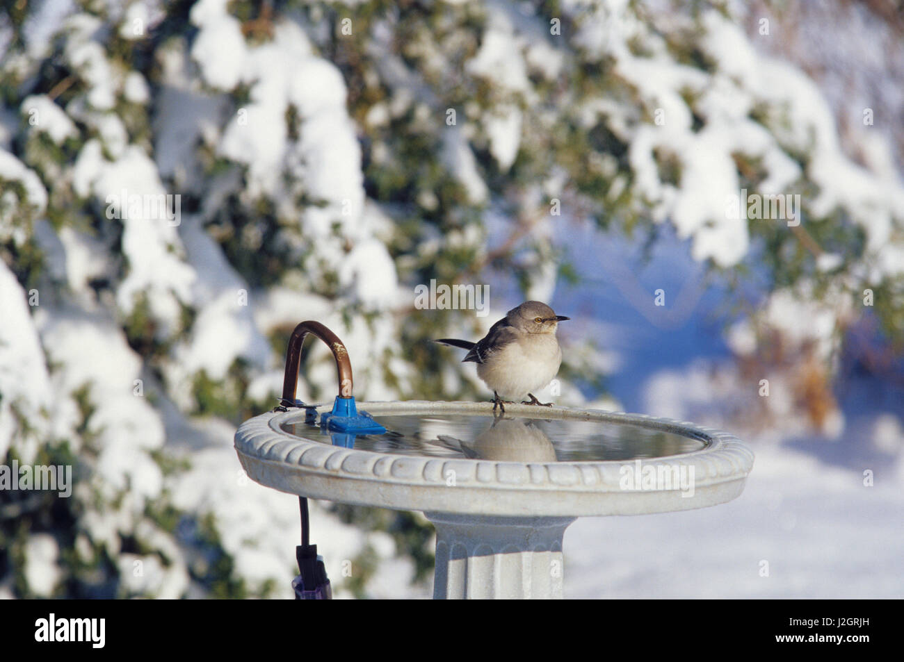 Passeriformes Passerine Ornithology Stockfotos & Passeriformes ...