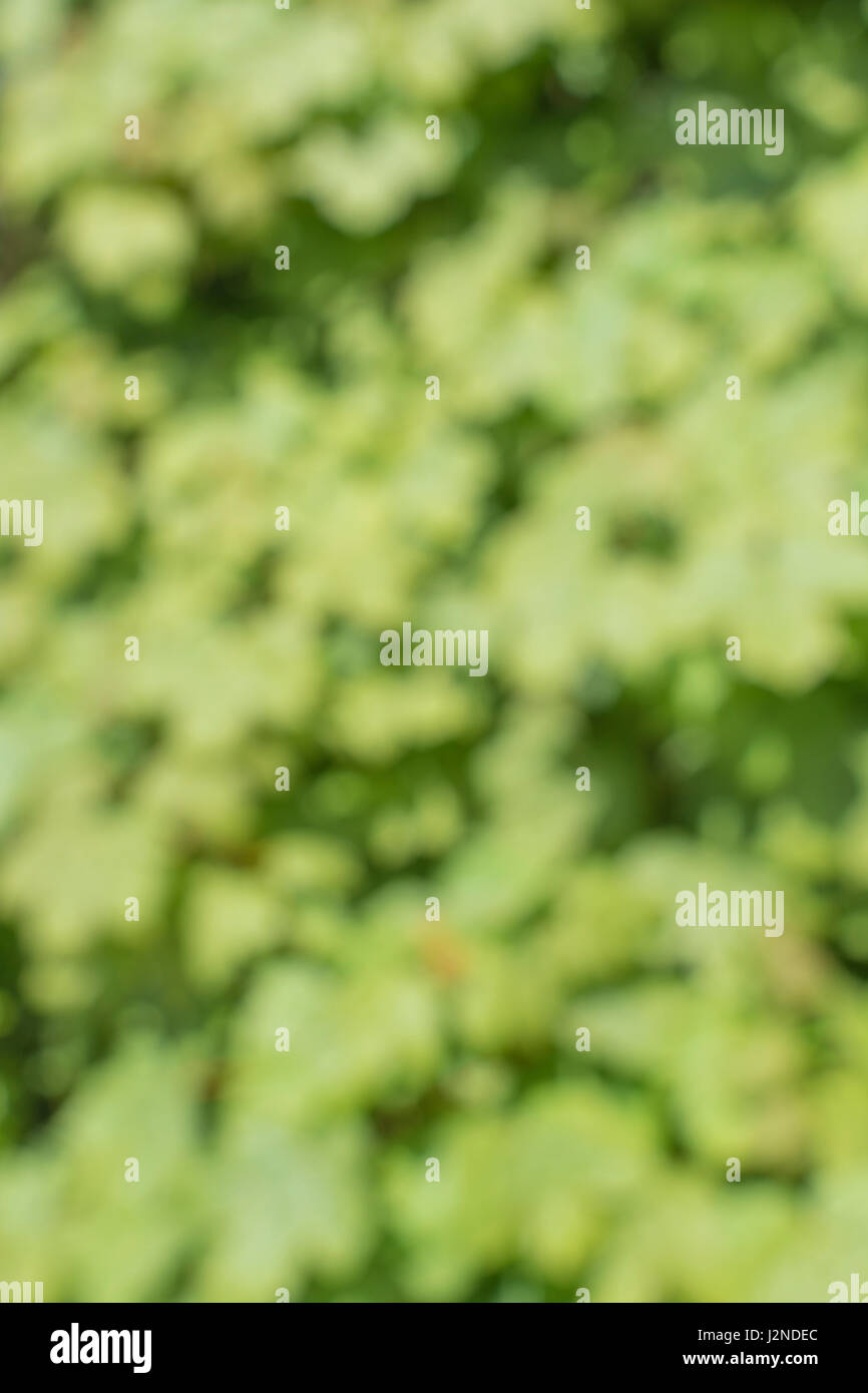 Verschwommen, Soft-Fokus, grüne Bio-abstrakte Formen als Hintergrund, Hintergrundbilder oder Textur. Stockbild