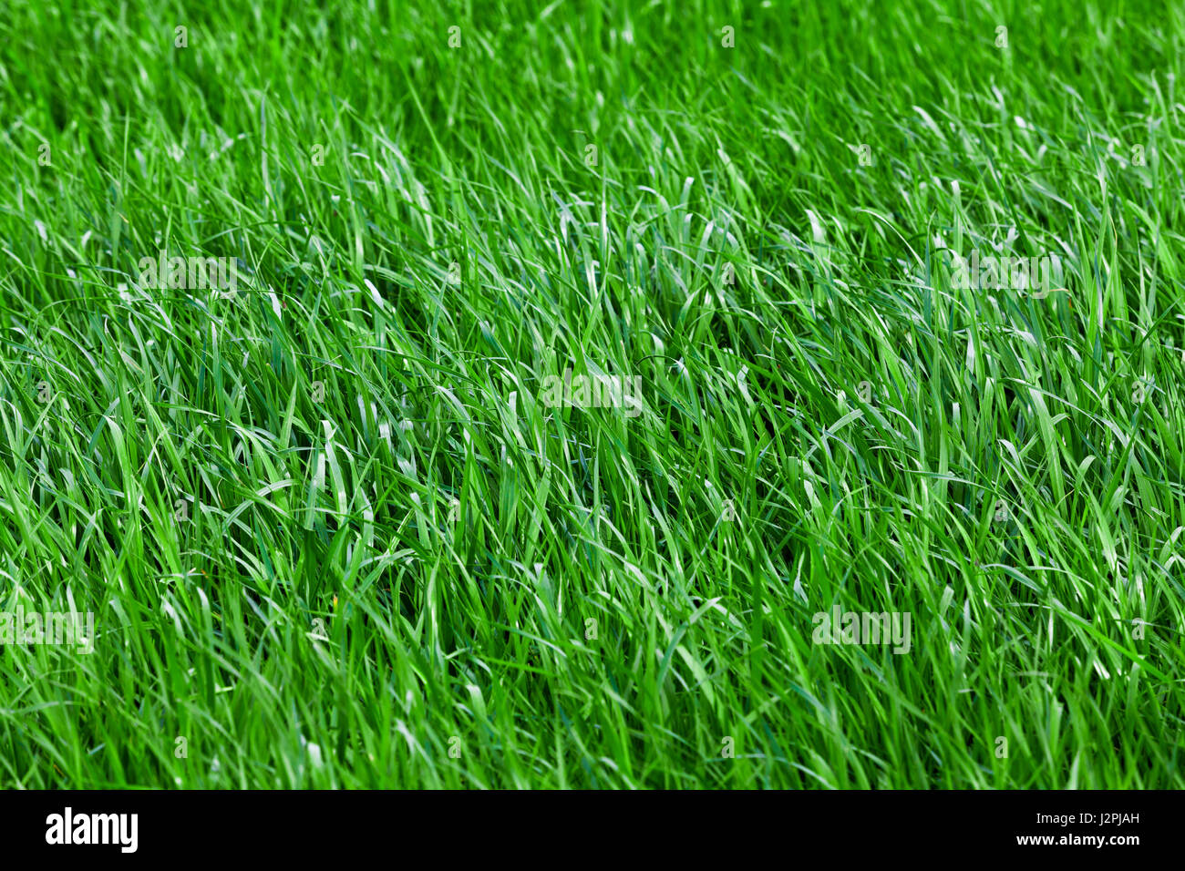 grass seamless texture stockfotos grass seamless texture bilder seite 3 alamy. Black Bedroom Furniture Sets. Home Design Ideas