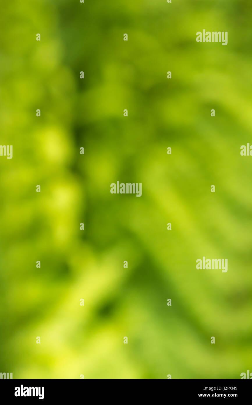 Verschwommene, Weich-Fokus, grün Bio abstrakte Formen als Hintergrund, Tapeten oder Textur, oder abstrakter Stockbild