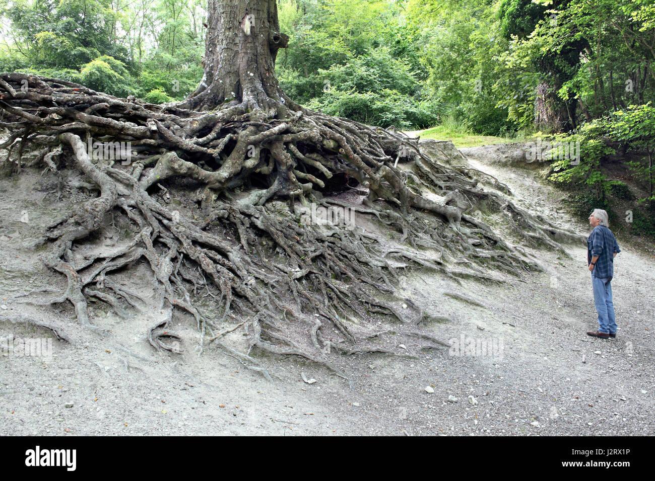 Baumwurzeln ausgesetzt durch erosion an einem hang in der for Wildparks in der nahe