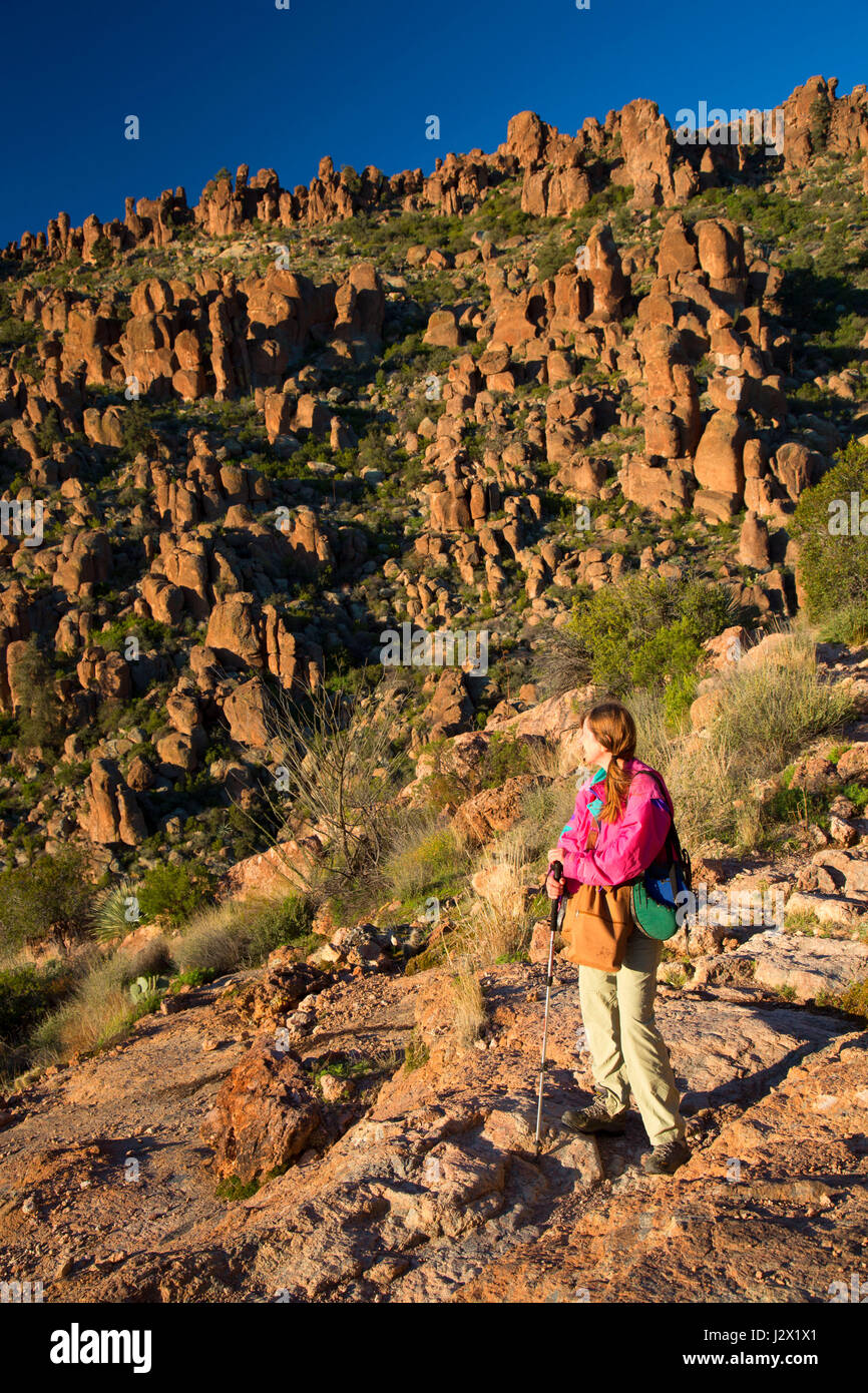 Wanderer auf Peralta Trail, Superstition Wilderness, Tonto National Forest, Arizona Stockbild