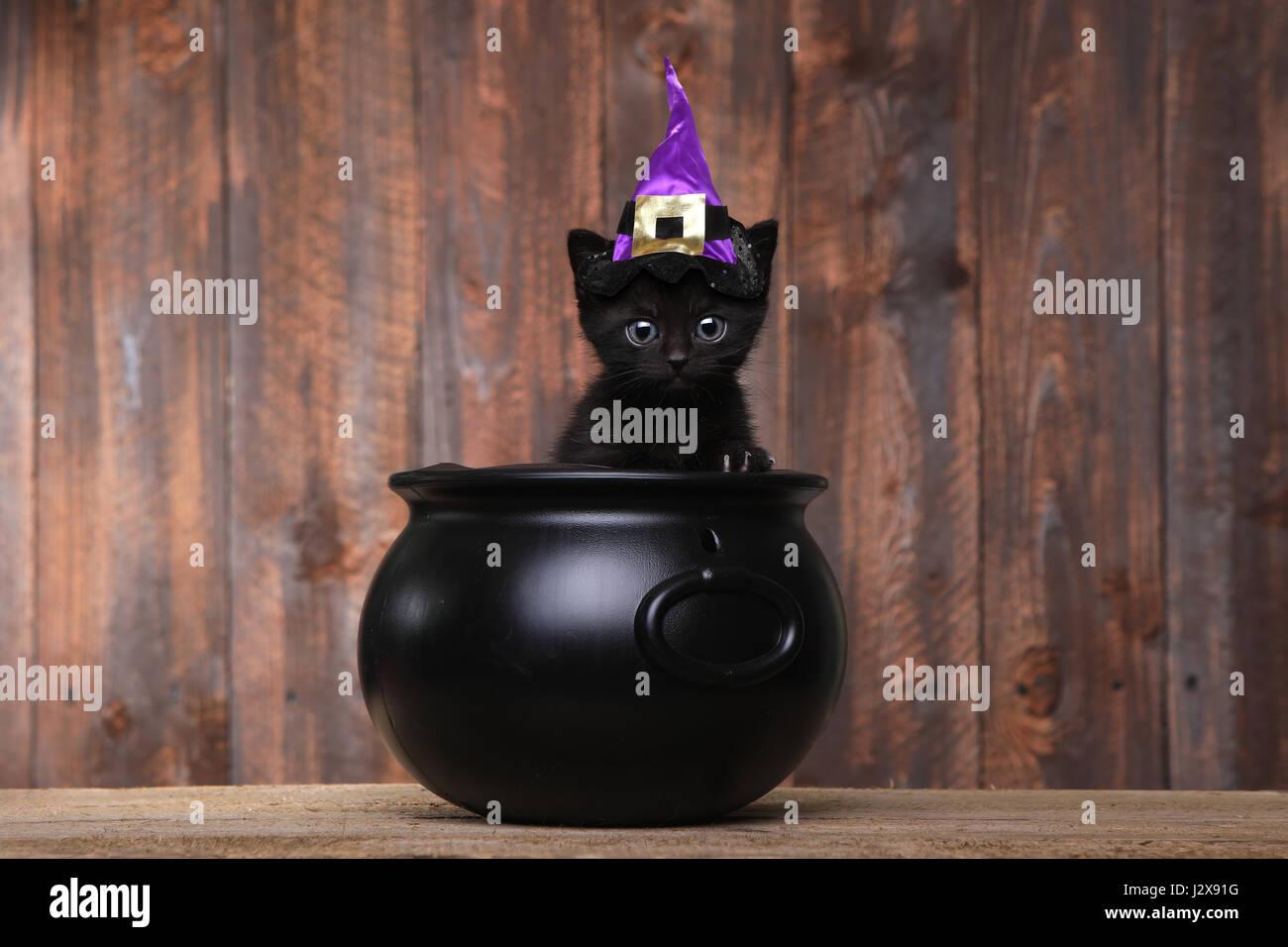 Witch Cat Stockfotos & Witch Cat Bilder - Alamy
