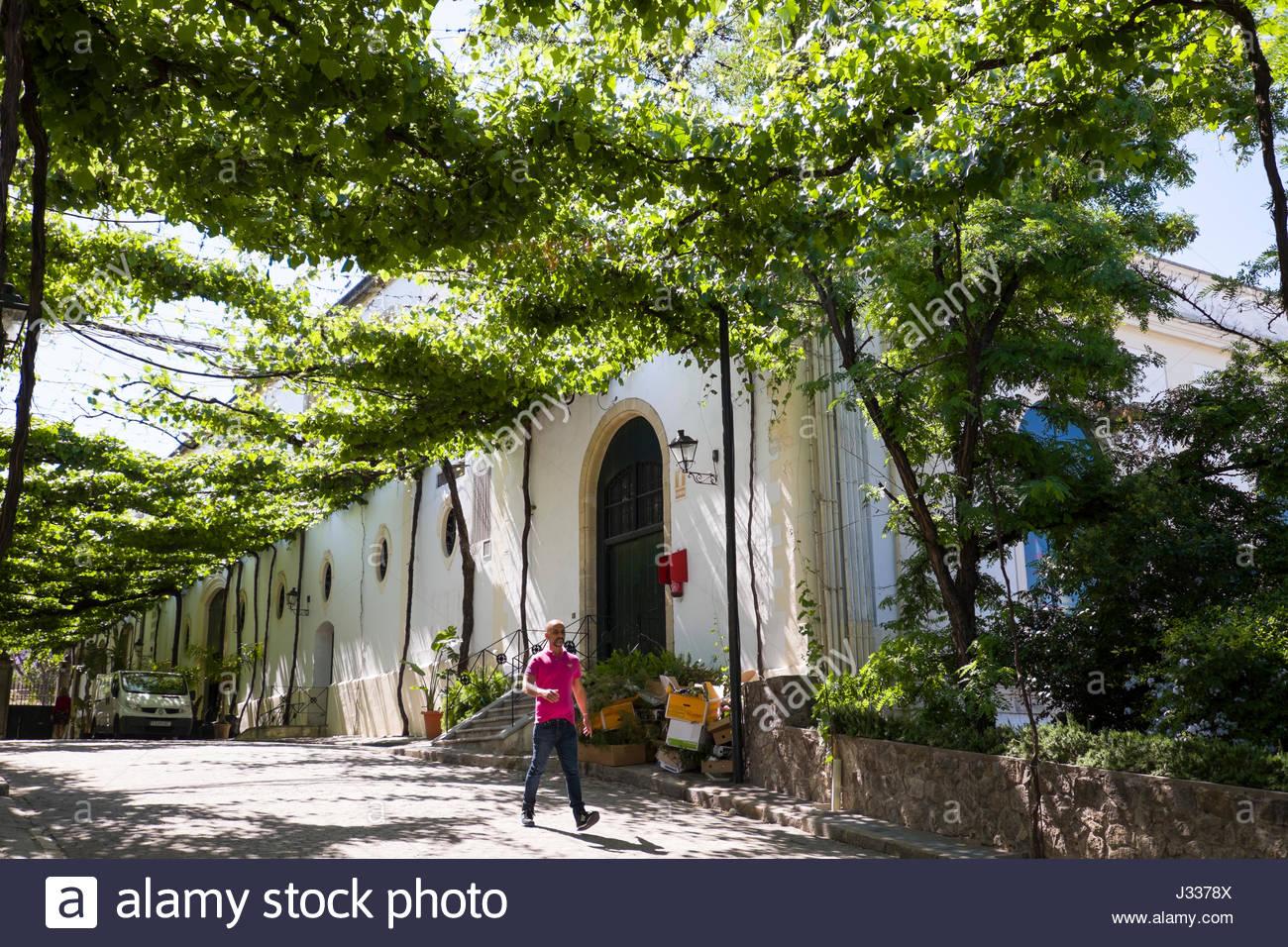 Reben wachsen auf Draht Gitter Schatten an der González Byass Tio ...