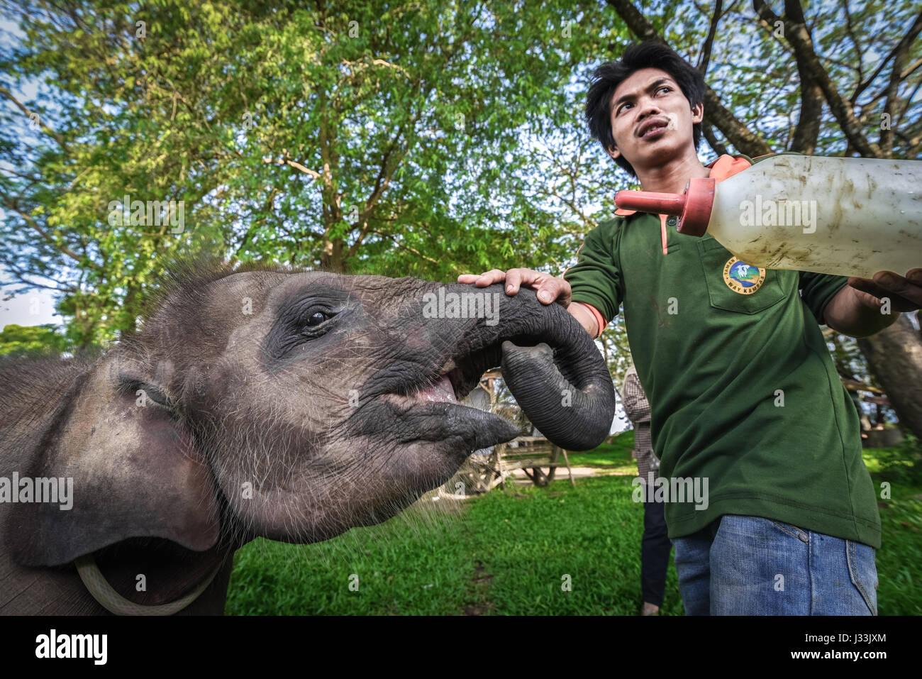 Milch-Zeit für Yekti, ein Elefant Kalb, die nach gerettet gefunden verletzten und getrennt von seiner Herde Stockbild