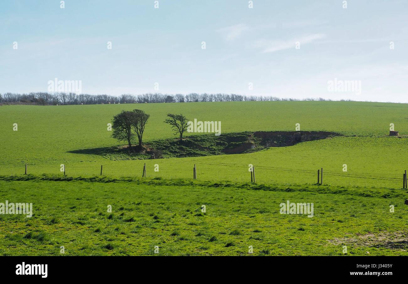 Landschaft cleft Narbe hohlen Loch Riss in Bäumen gesäumte Rasenfläche mit isolierten Bäume Stockbild