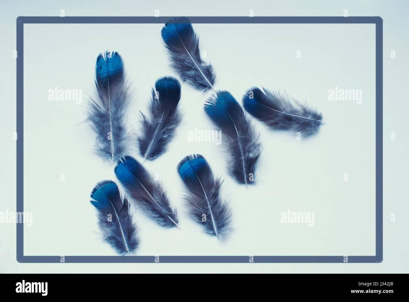 Gruppe von Federn mit blauen Ende. Stockbild