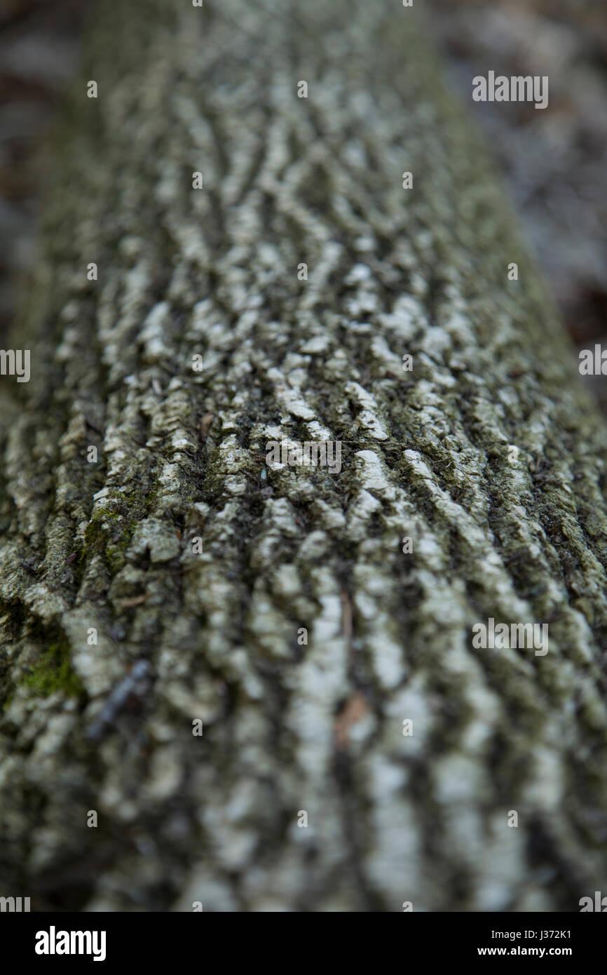 Nahaufnahme des umgestürzten Baum auf dem Waldboden. Interessante Textur in der Rinde. Stockbild