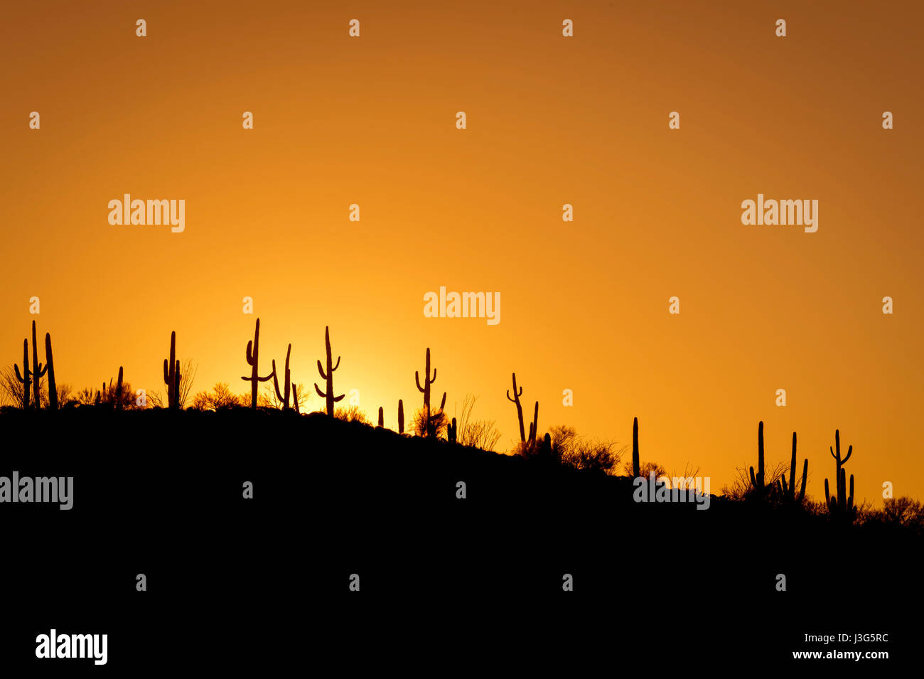 Cactus Hill Sunrise, Tonto National Forest, Arizona USA Stockfoto