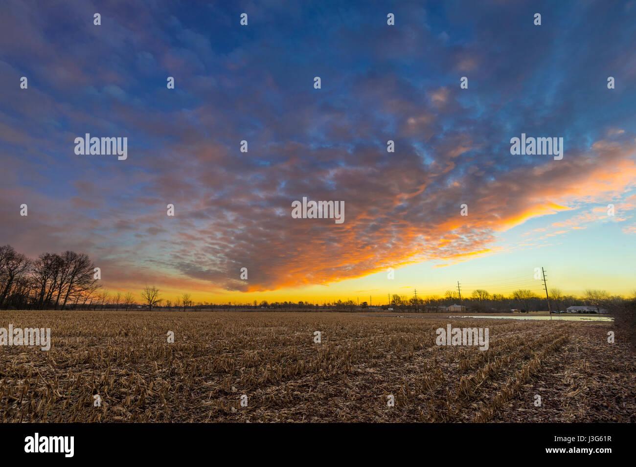 Maisfeld bei Sunrise, Indiana, USA Stockbild