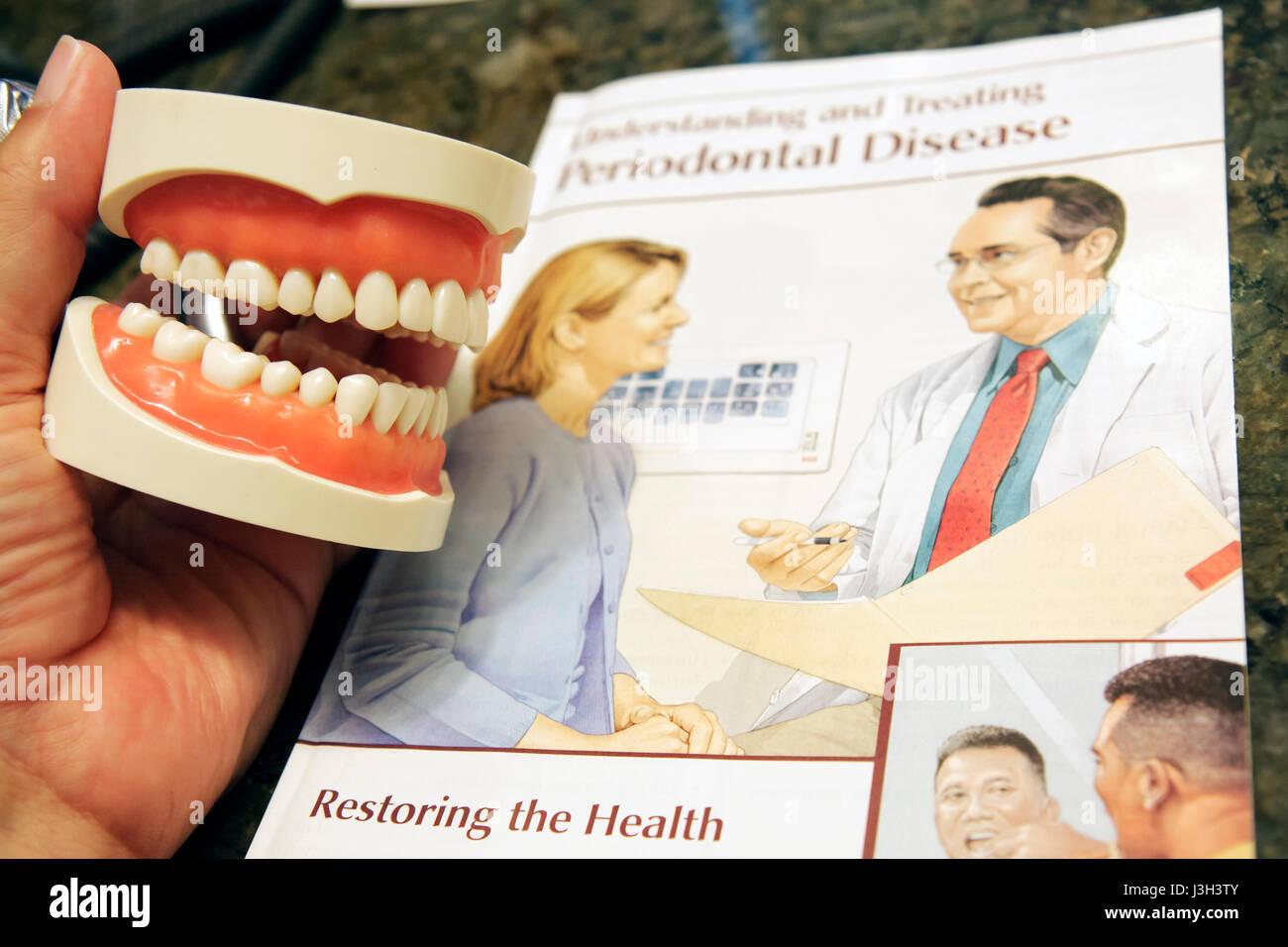 Fantastisch Anatomie Der Zähne Und Des Zahnfleischs Bilder ...