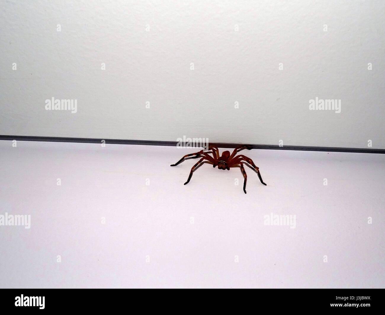 Eine Spinne an der Wand Stockbild