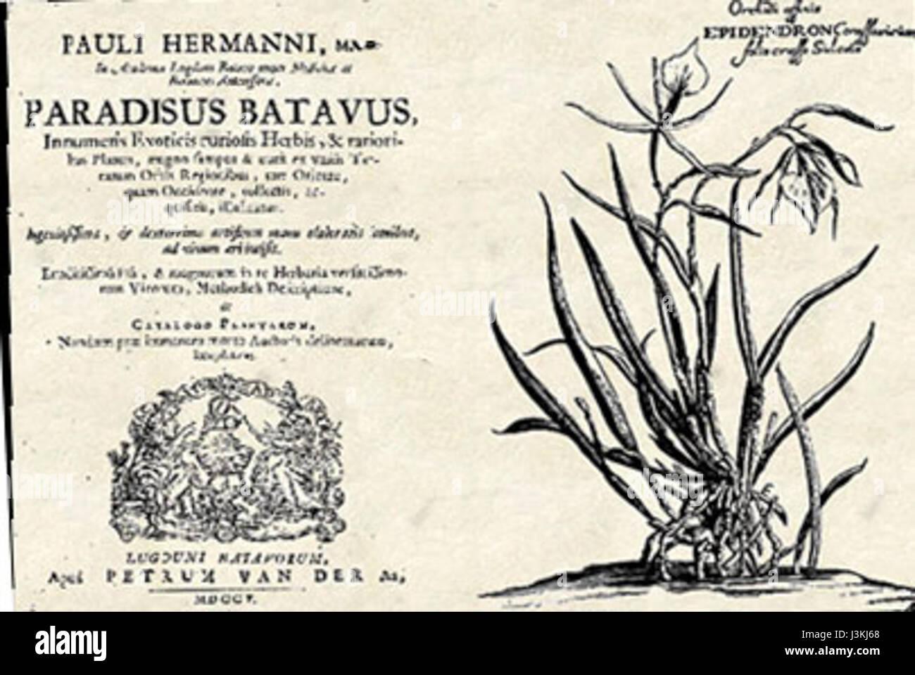 Batavus Stockfotos Batavus Bilder Alamy