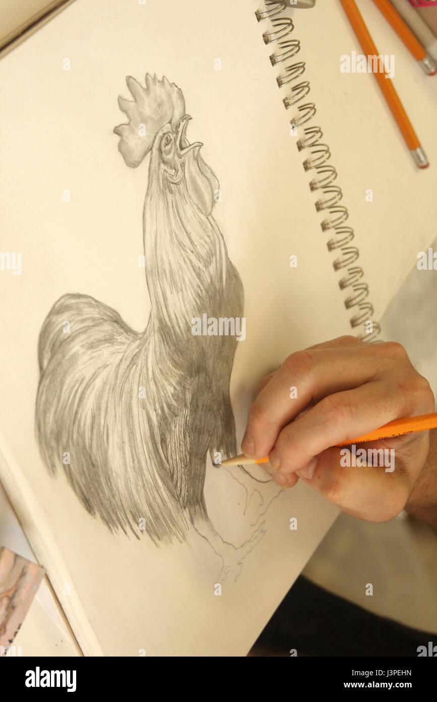 Kleines Madchen Zeichnen Einen Hahn In Bleistift Auf Weissem Papier