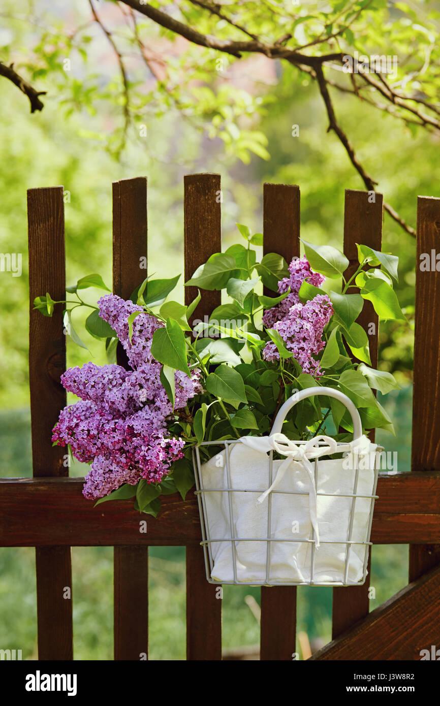 Lila Blumen Im Korb Holz Gartenzaun Hangen Duft Von Flieder
