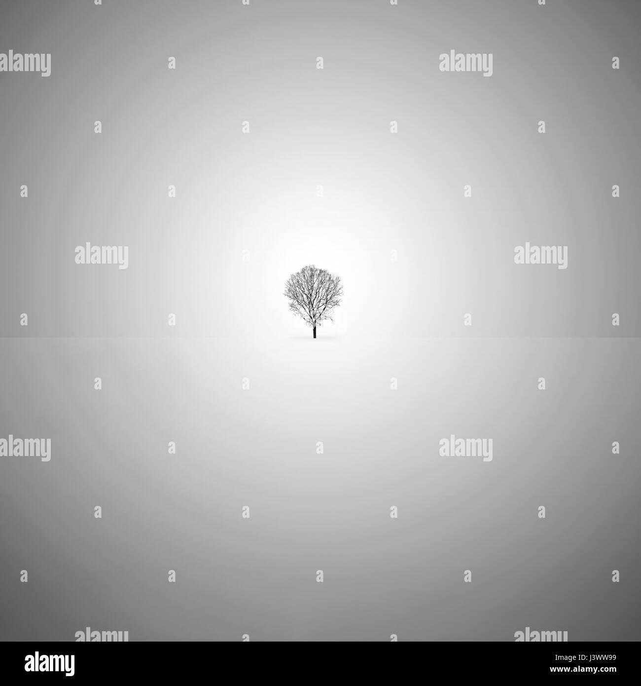 Minimalistische Kunst schwarz-weiß Foto mit einem einsamen Baum im Schnee. Stockfoto