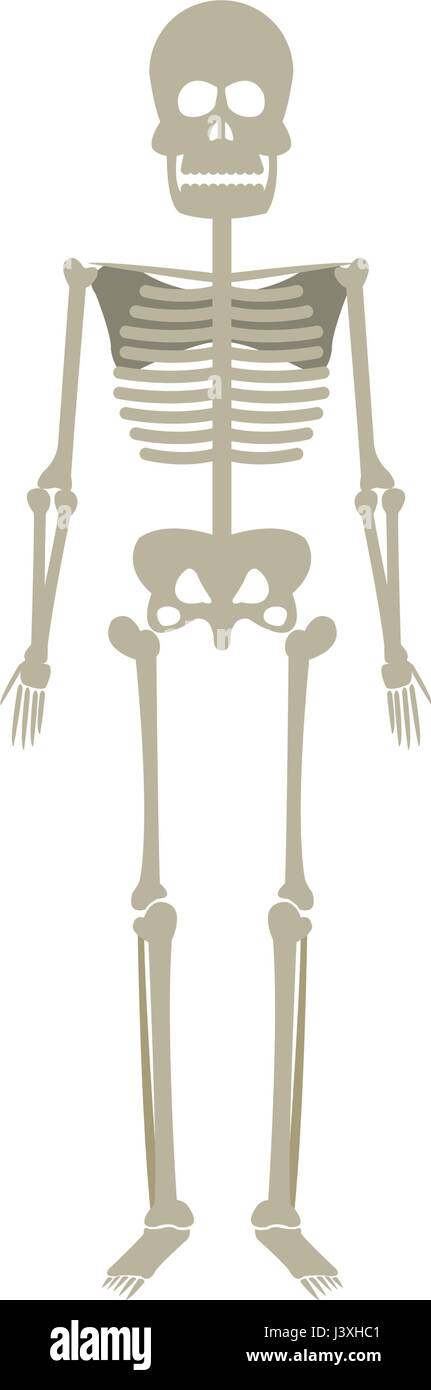 Scapula And Bone Stockfotos & Scapula And Bone Bilder - Alamy