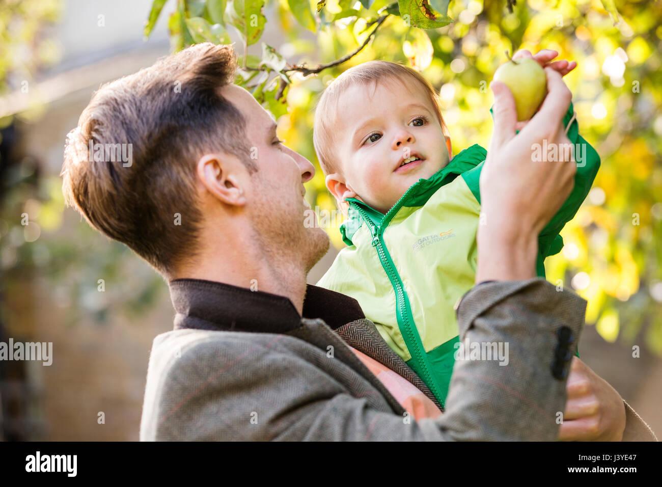 Vater und Kind Sohn einen Apfel pflücken, im Garten Stockbild
