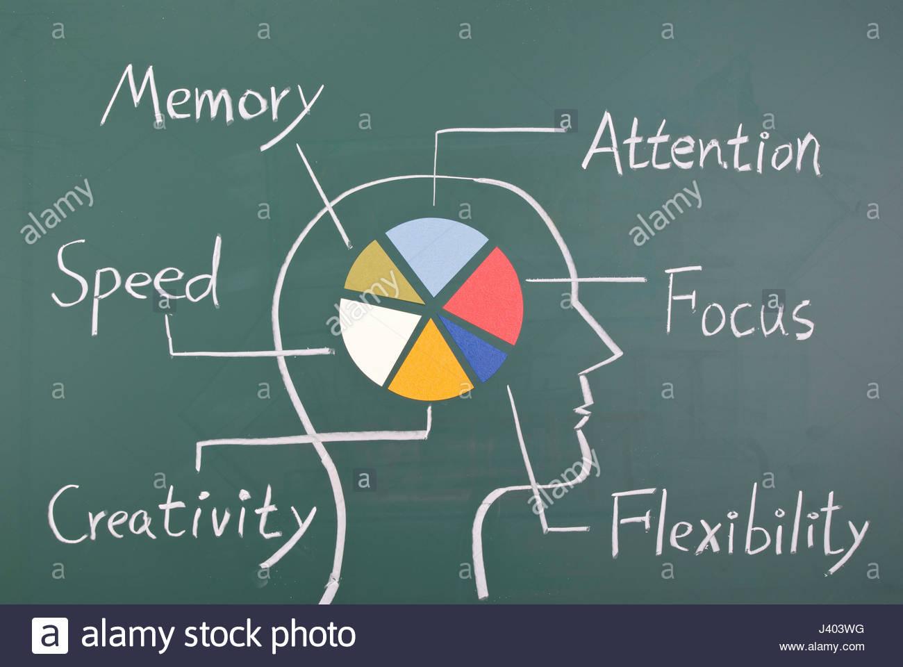 Tolle Gehirn Diagramm Beschriftet Fotos - Menschliche Anatomie ...