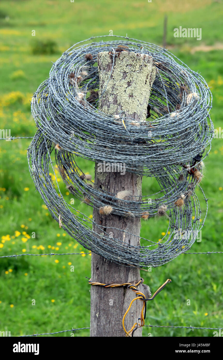 Barbed Wire Strand Stockfotos & Barbed Wire Strand Bilder - Alamy