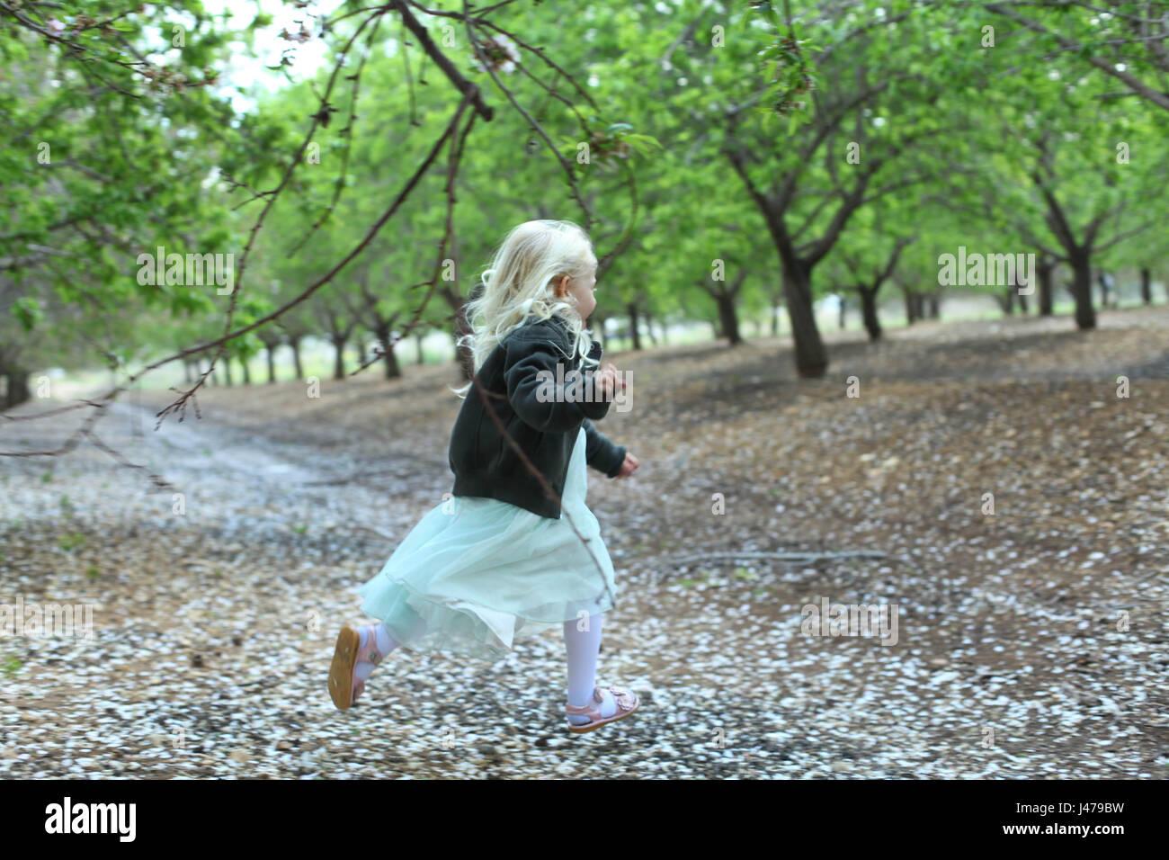 Junges Mädchen von vier, läuft in einen Mandel-Hain mit dem Boden bedeckt mit Blüten. Model-Release Stockbild