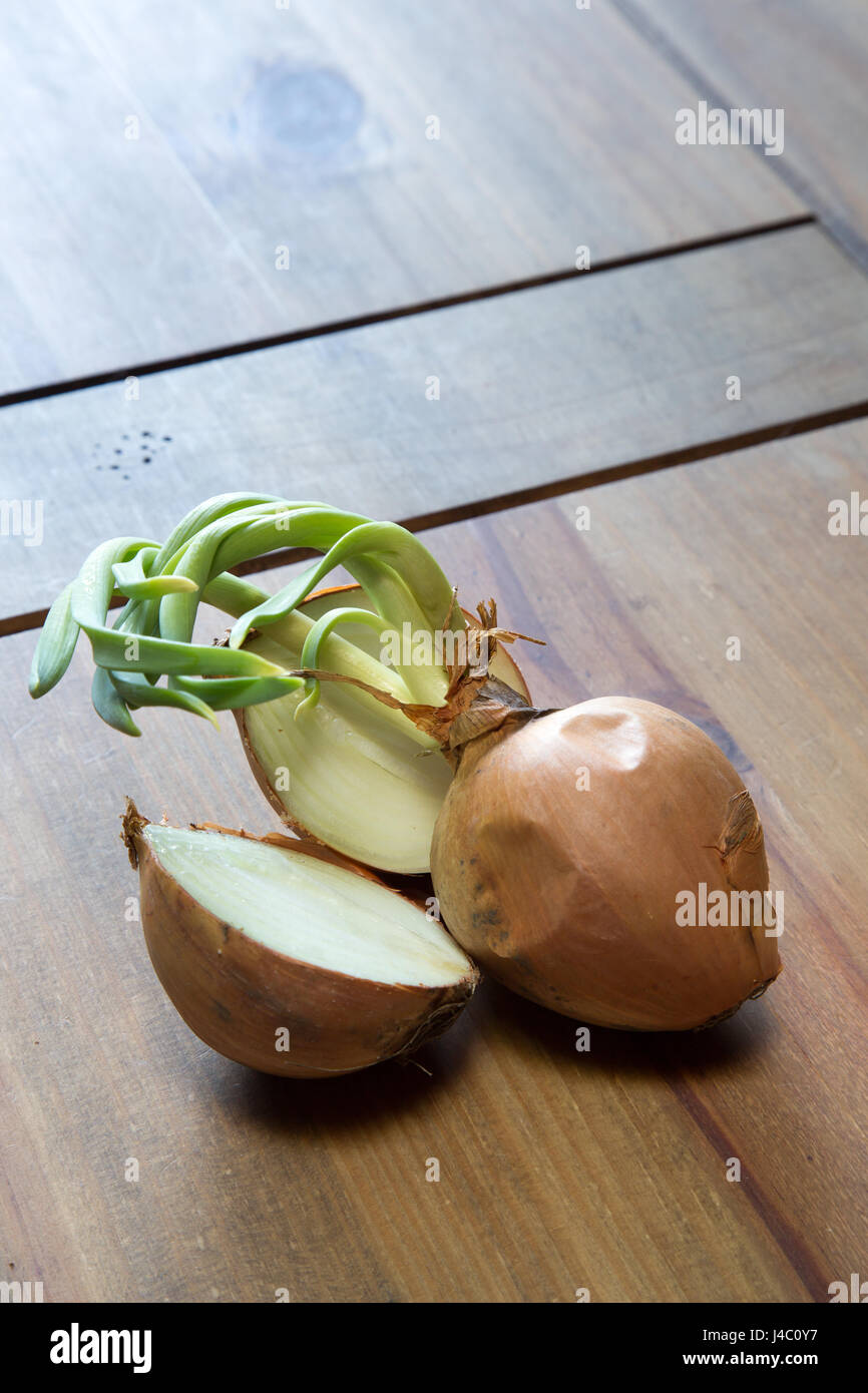 Rohe Zwiebel sprießen am Ende der Haltbarkeit. Allium Cepa L. Stockbild