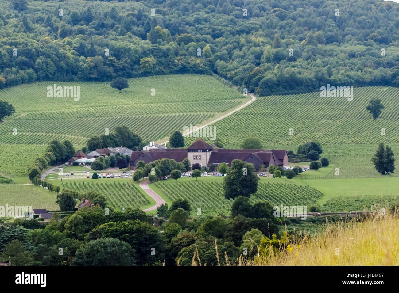 DORKING, SURREY, ENGLAND - 17. August 2015: Blick über den Denbies Wine Estate, eingestellt auf den Pisten Stockbild