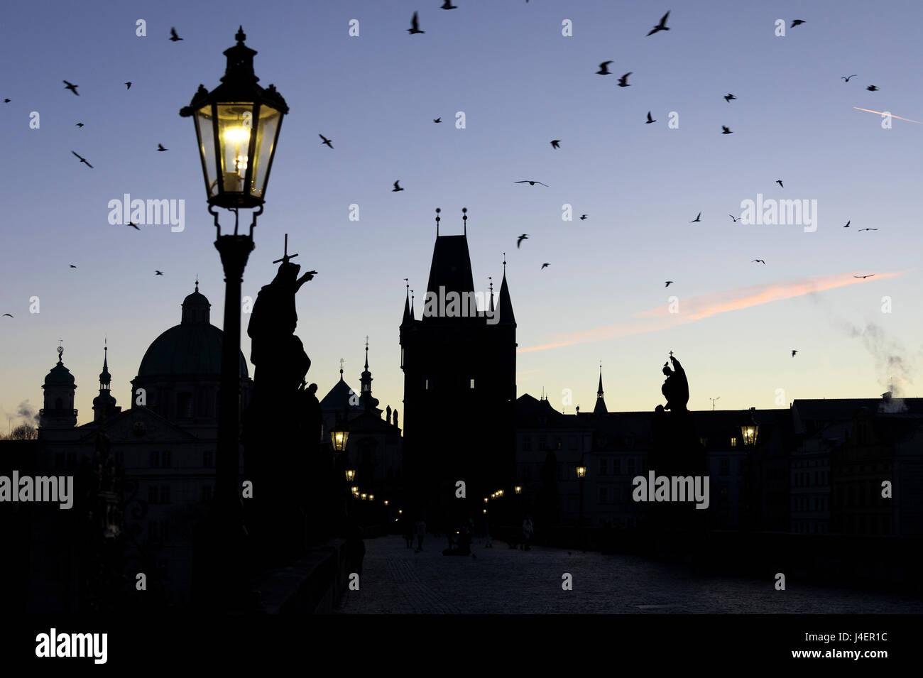 Ein Vogelschwarm fliegt auf die historische Karlsbrücke auf Moldau im Morgengrauen, UNESCO, Prag, Tschechische Stockbild