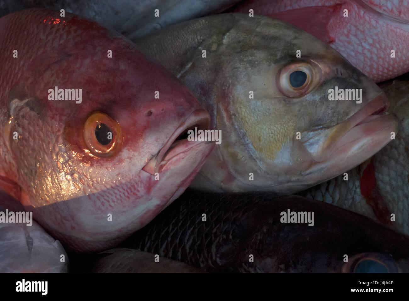 fish bulging eyes stockfotos fish bulging eyes bilder. Black Bedroom Furniture Sets. Home Design Ideas