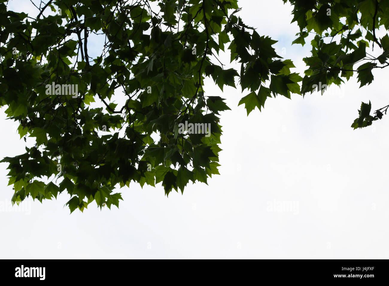 Grüne Blätter und Zweige gegen den Himmel Stockbild