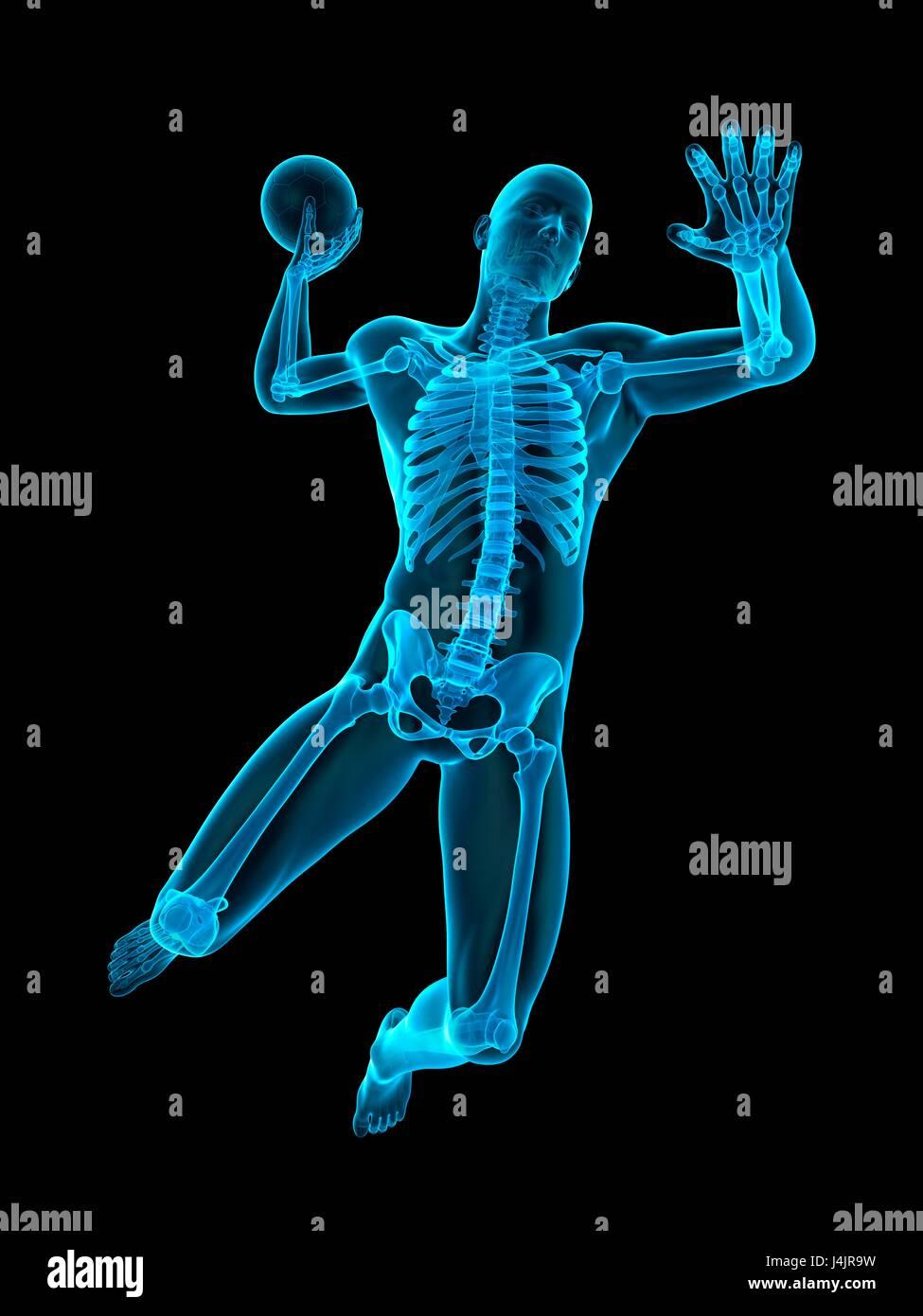 Skelett-Struktur der Handballspieler, Abbildung Stockfoto, Bild ...