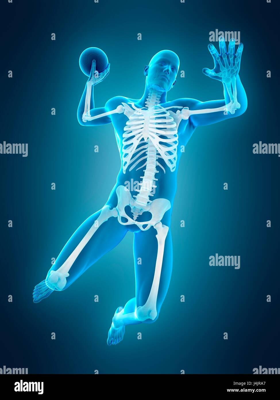 Ziemlich Hunde Skelett Anatomie Diagramm Bilder - Physiologie Von ...