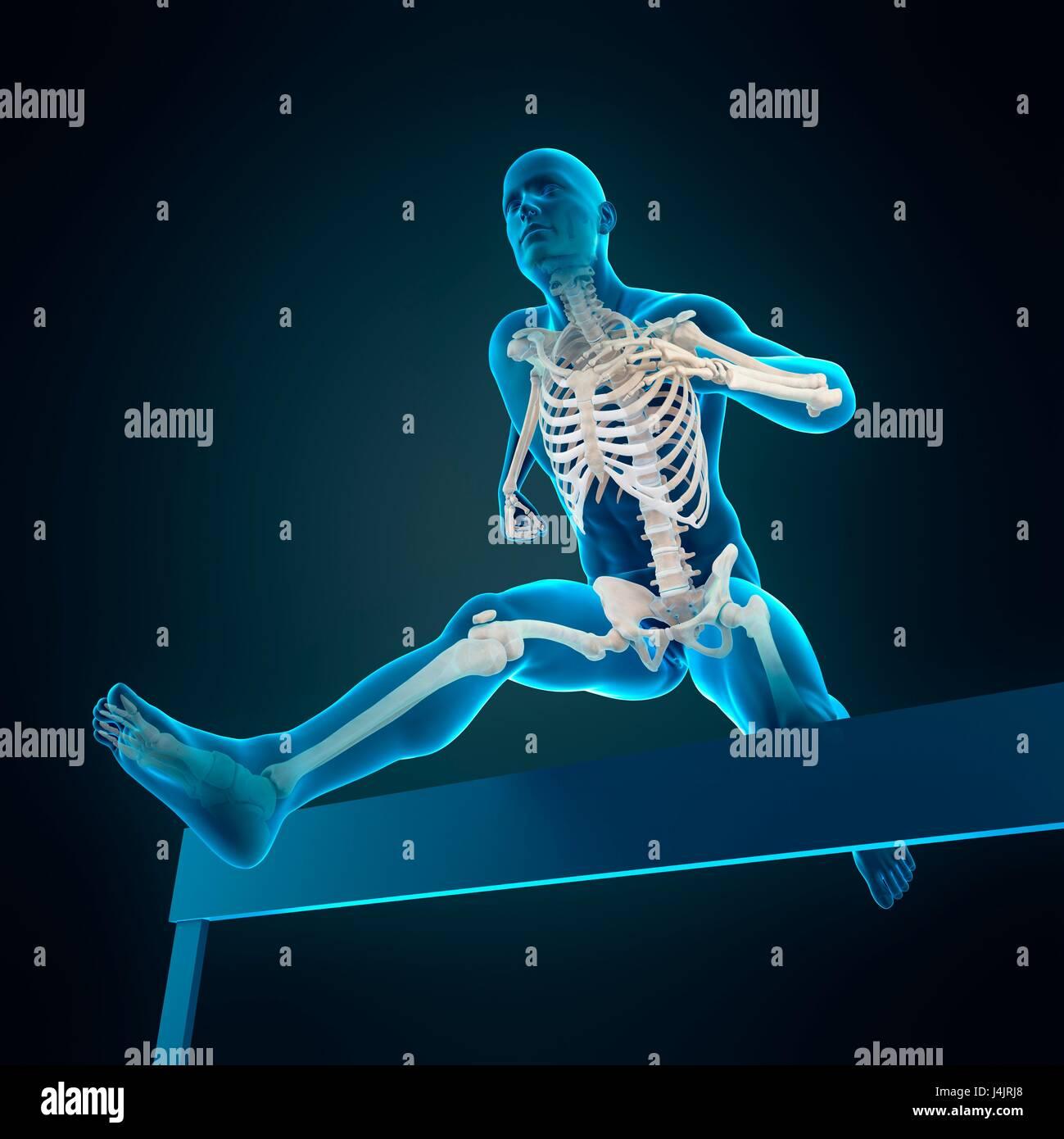 Skelett-Struktur der Athlet Hürdenlauf über Hürde, Abbildung ...