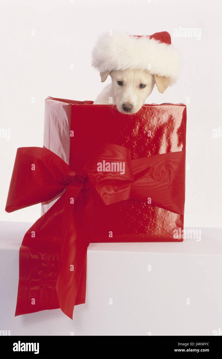 Geschenkkarton Weihnachten.Weihnachten Hund Welpe Nikolaus Mütze Geschenk Karton