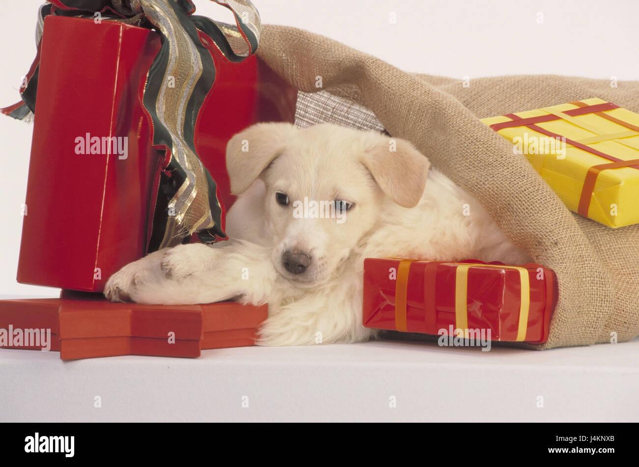 Beutel, Hund Welpe, Geschenke, Weihnachtsgeschenke, Nikolaus Beutel ...