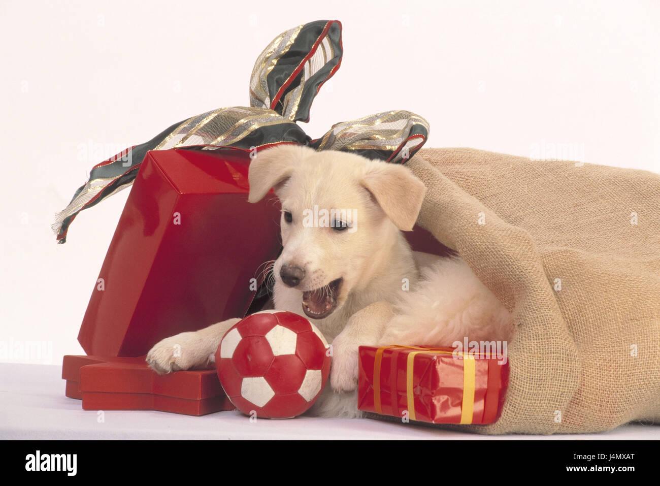 Beutel, Hund Welpe, ball, Weihnachtsgeschenke präsentiert, Nikolaus ...