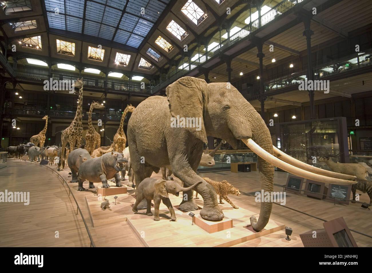 Frankreich, Paris, Jardin des Plantes, Museum National d \' Histoire ...