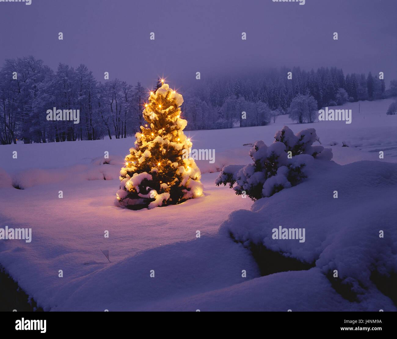 Garten, Weihnachtsbaum, Schnee, Beleuchtung, Kerze beleuchtet Rallye ...