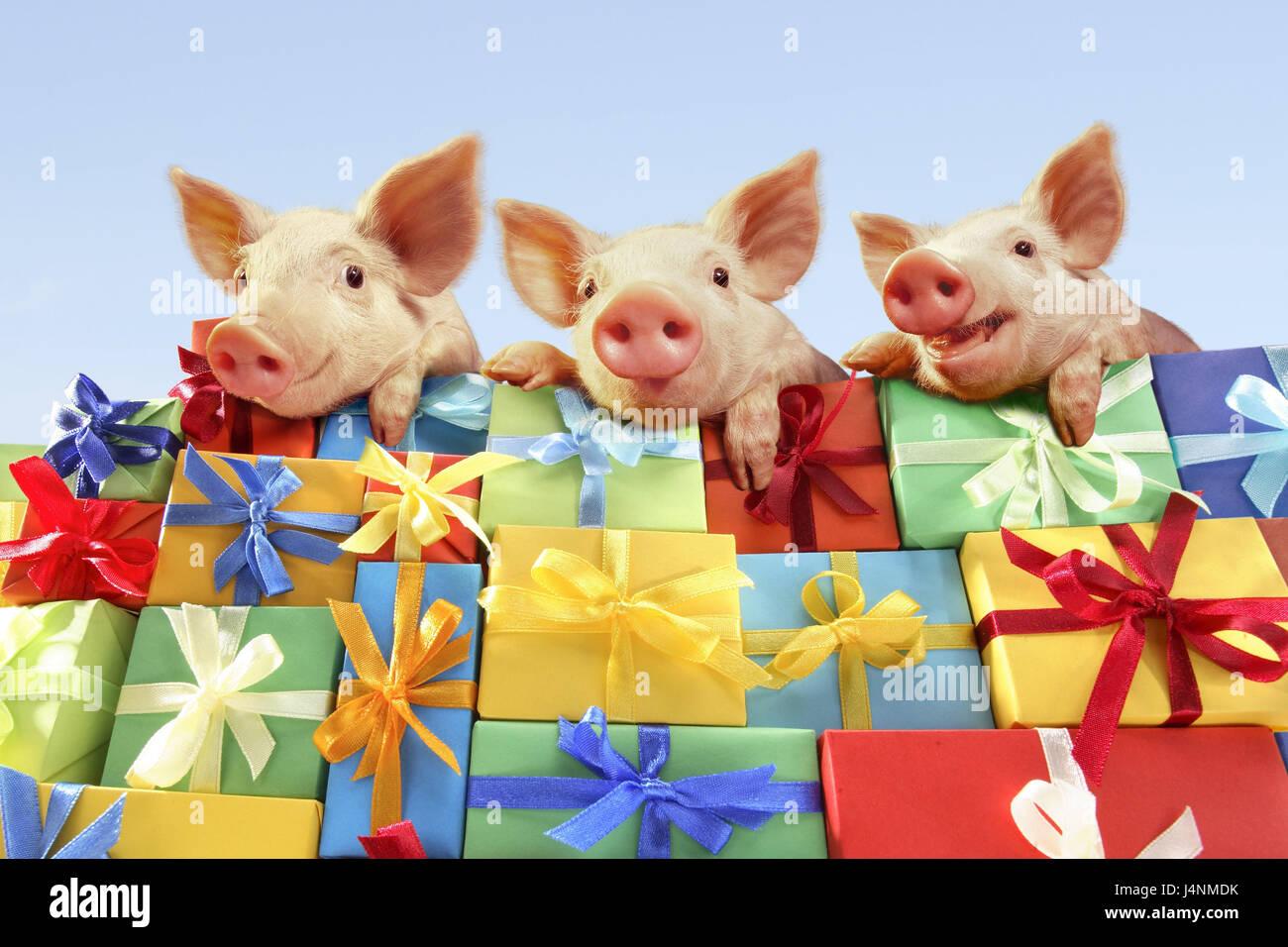 Weihnachtsgeschenke Witzig.Geschenk Berg Ferkel Drei Porträt Weihnachten Valentinstag