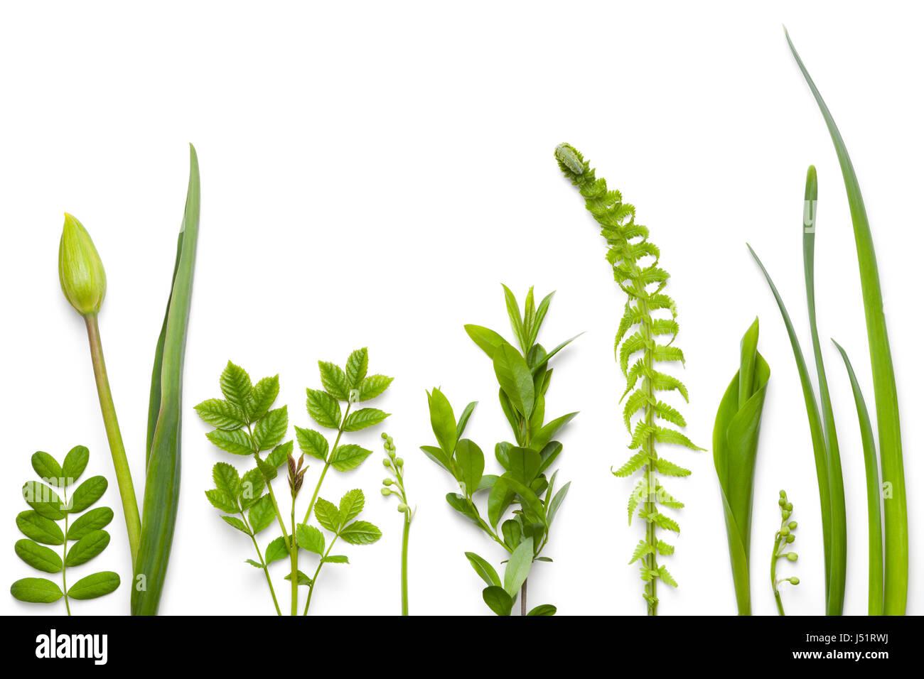 Grüne Pflanzen isoliert auf weißem Hintergrund. Flach zu legen. Ansicht von oben Stockbild