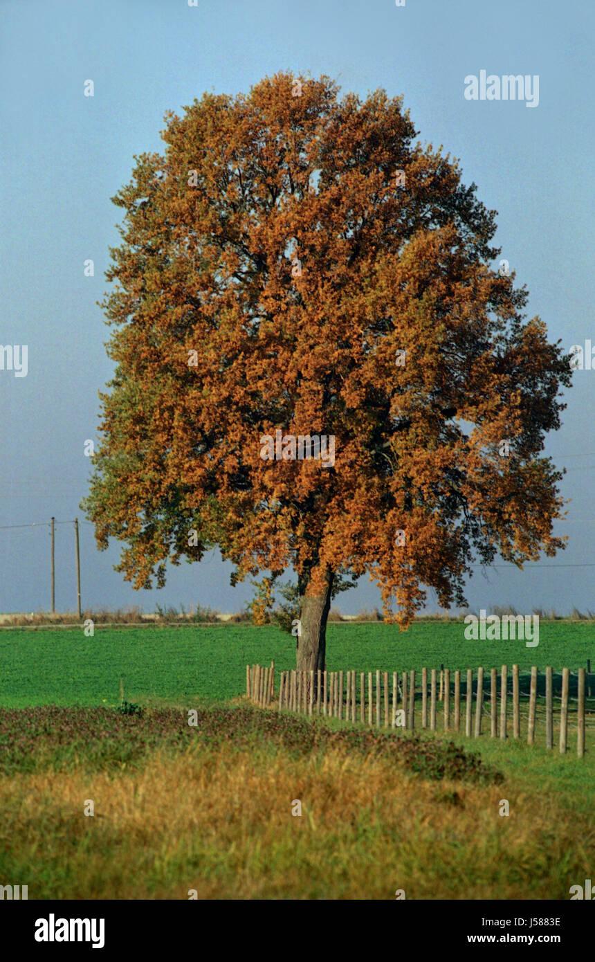 Erfreut Pecan Baum Färbung Seite Bilder - Druckbare Malvorlagen ...