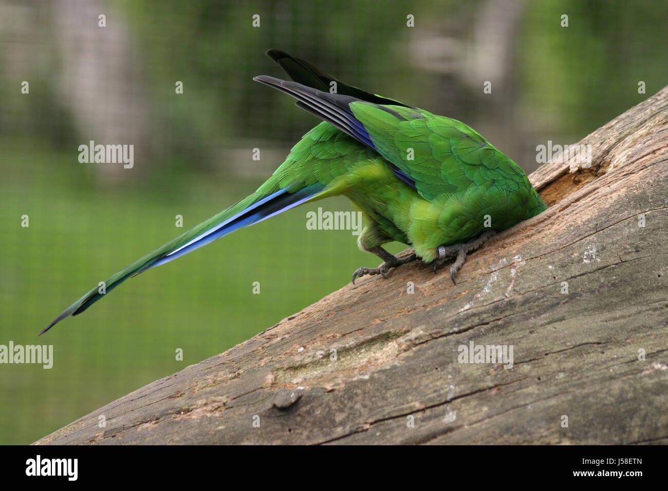 Ausgezeichnet Blaue Vogel Färbung Seite Zeitgenössisch ...