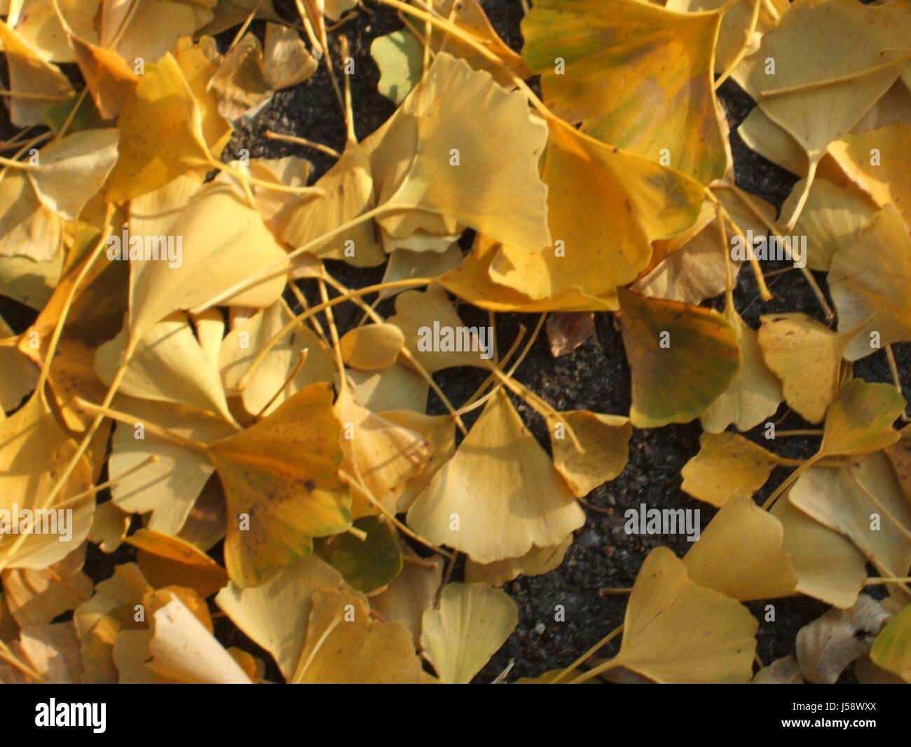 Ausgezeichnet Herbst Baum Mit Blättern Färbung Seite Ideen ...