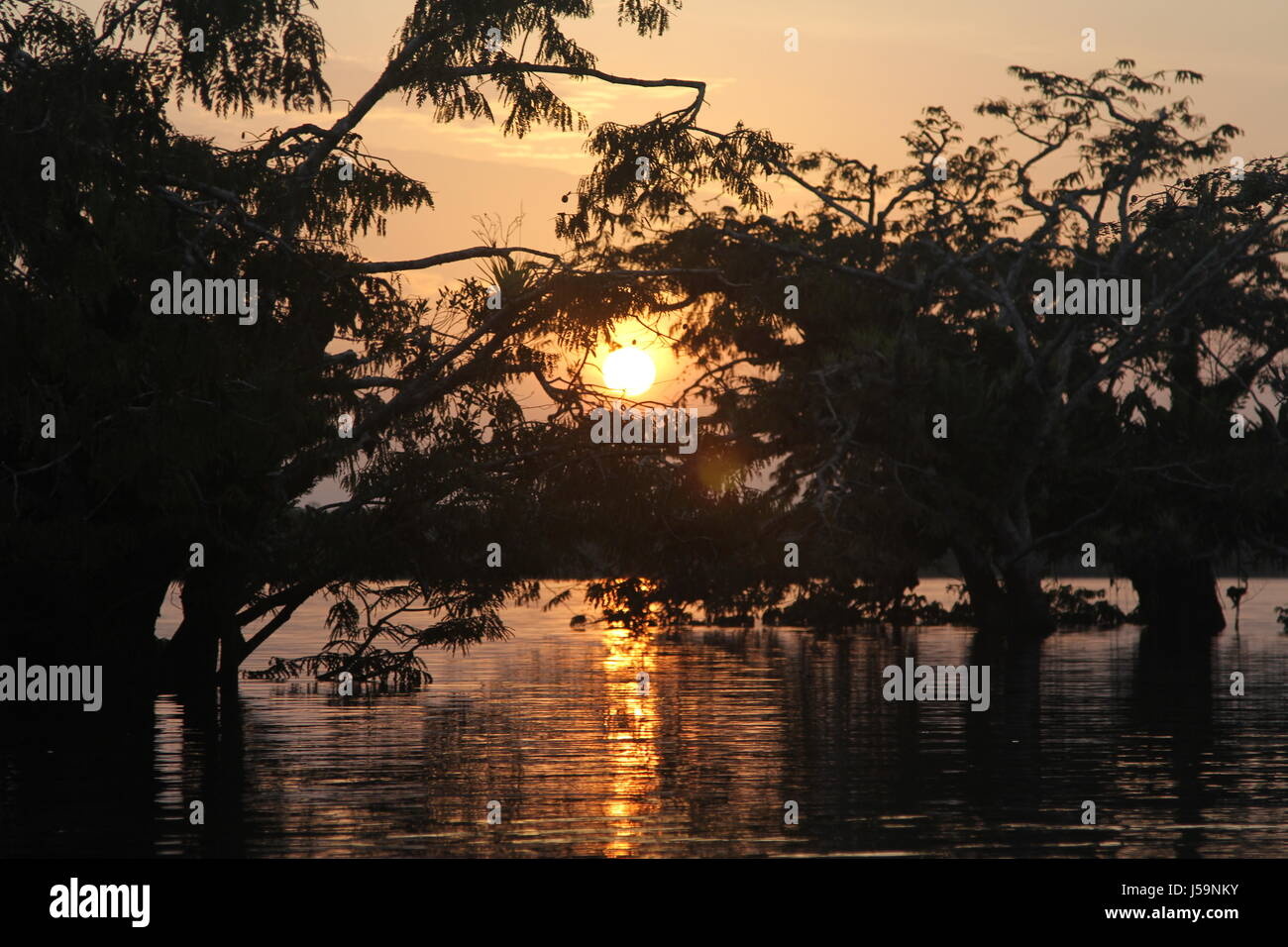 Amazon-Sonnenuntergang Stockbild