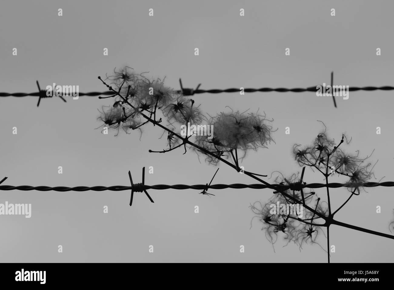 Winter Zaun Metall Grenze Wire Stacheldraht tristen Anstrengung ...